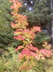 Fall. 2 2011 Lake